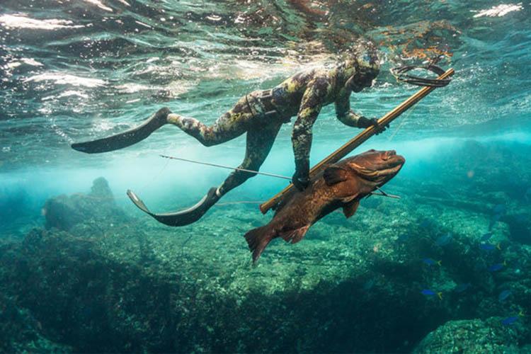 Spear fishermen diving.