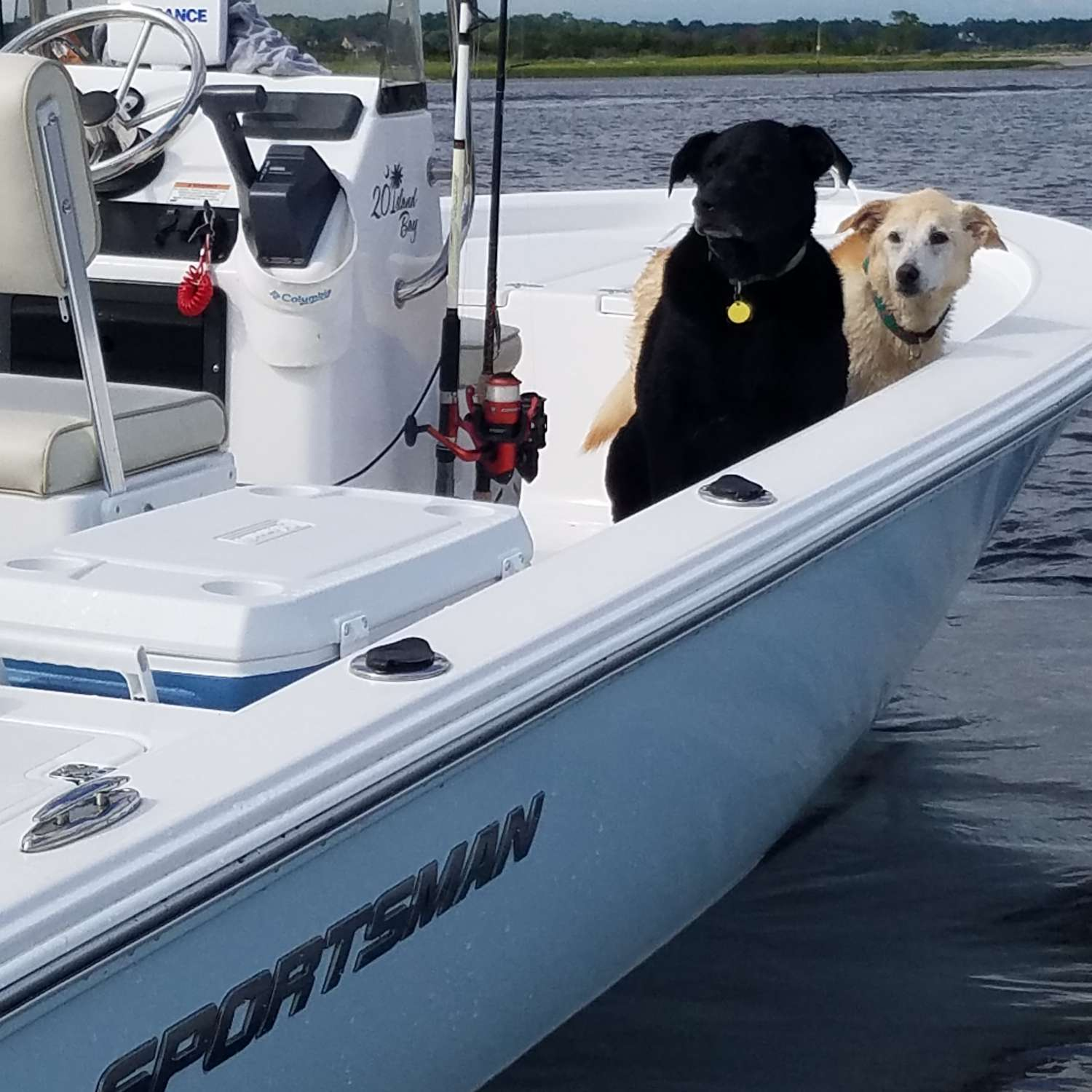 "Title: ""labrador"" Weekend 2016 - On board their Sportsman Island Bay 20 Bay Boat - Location: Surfside Beach, South Carolina. Participating in the Photo Contest #SportsmanSeptember2016"