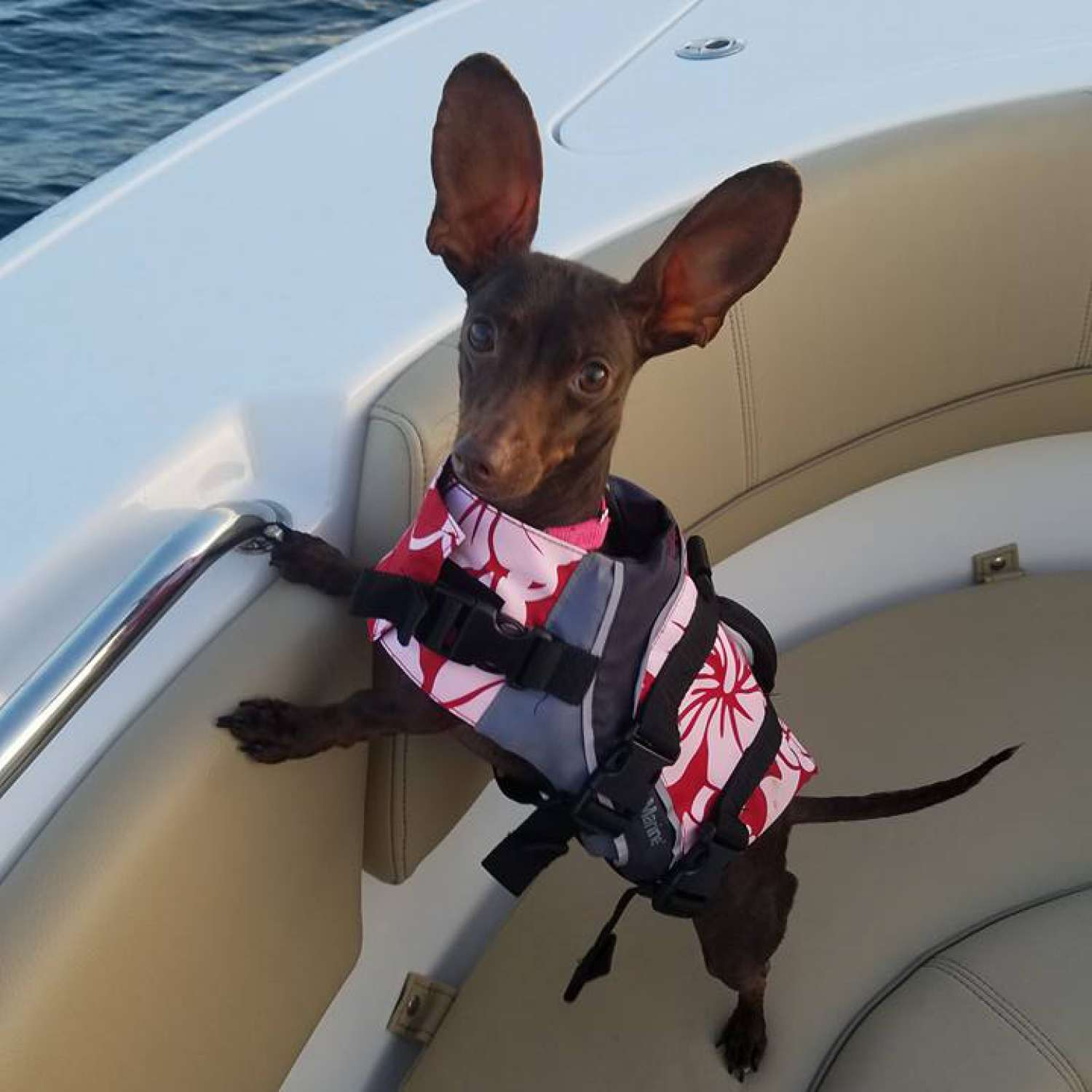 Title: Annabelle Enjoying The Maiden Voyage On The New Heritage 231 - On board their Sportsman Heritage 231 Center Console - Location: Chipley, Florida. Participating in the Photo Contest #SportsmanFebruary2017
