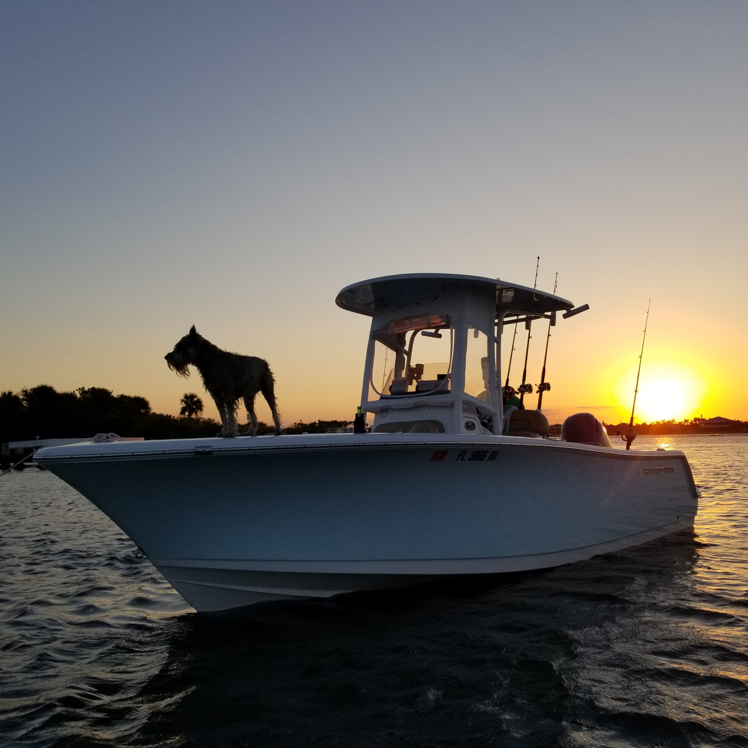 Title: A Schnauzer Sportsman Sunset - On board their Sportsman Open 232 Center Console - Location: Boynton Beach, Fl. Participating in the Photo Contest #SportsmanApril2018