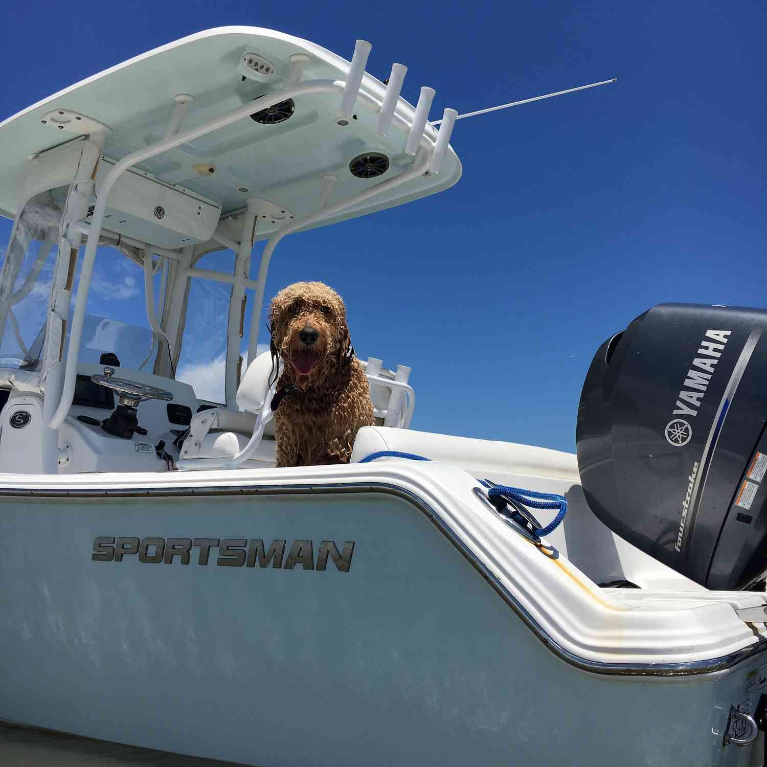 Title: Beau loves his Sportsman - On board their Sportsman Heritage 211 Center Console - Location: Wassaw Island, Georgia. Participating in the Photo Contest #SportsmanAugust2018