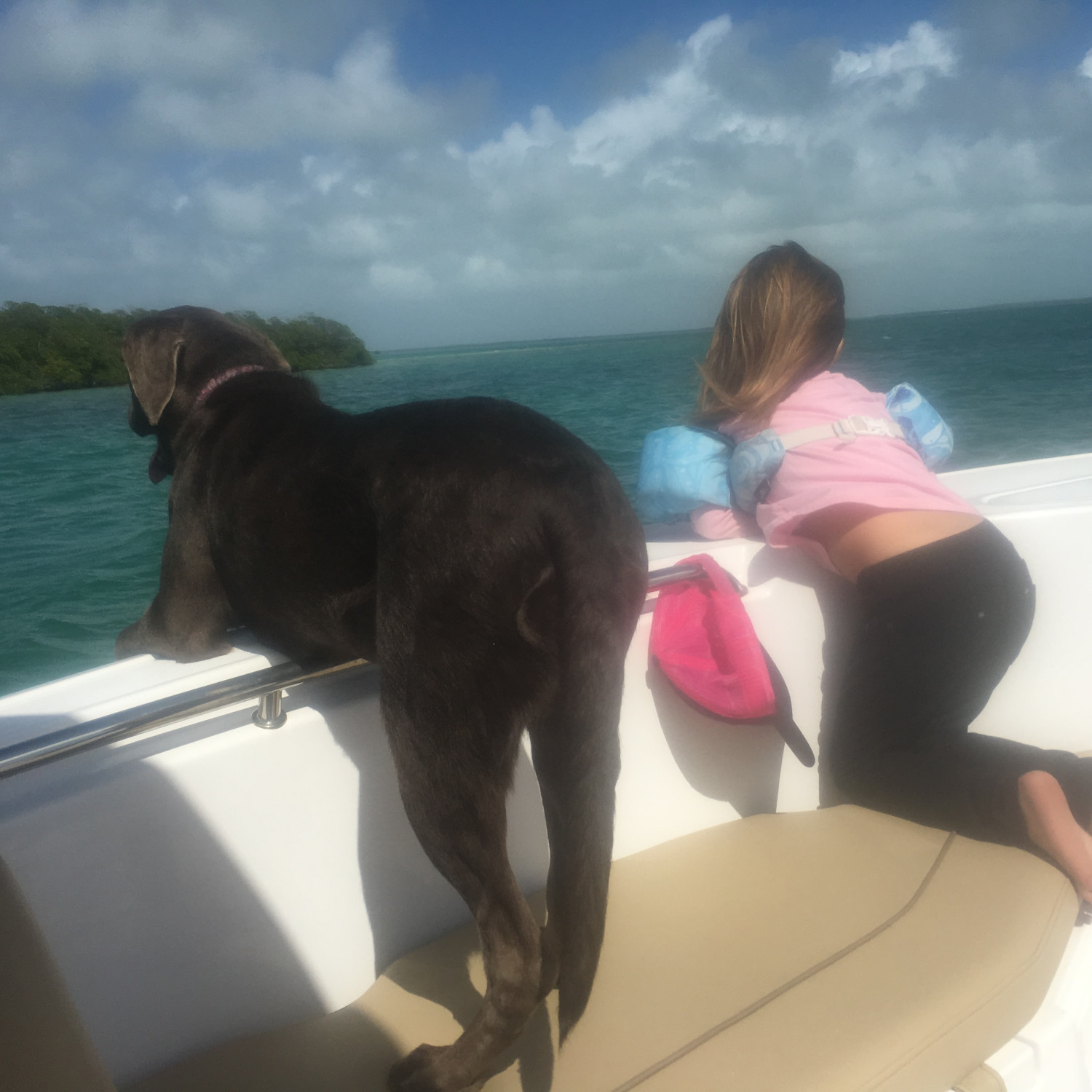 Title: Puppy butt - On board their Sportsman Open 232 Center Console - Location: Key west FL. Participating in the Photo Contest #SportsmanFebruary2018