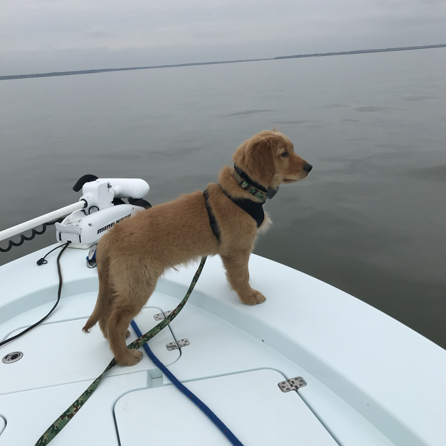 Title: Rebel's first ride - On board their Sportsman Masters 227 Bay Boat - Location: Wassaw Sound, GA. Participating in the Photo Contest #SportsmanMarch2018