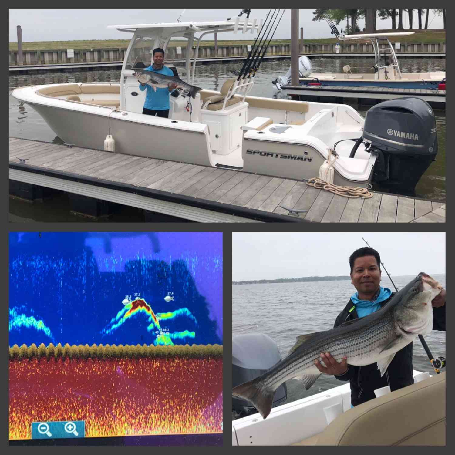 Title: Citation Chesapeake Bay Rockfish - On board their Sportsman Heritage 251 Center Console - Location: Coles Point, VA. Participating in the Photo Contest #SportsmanMay2018