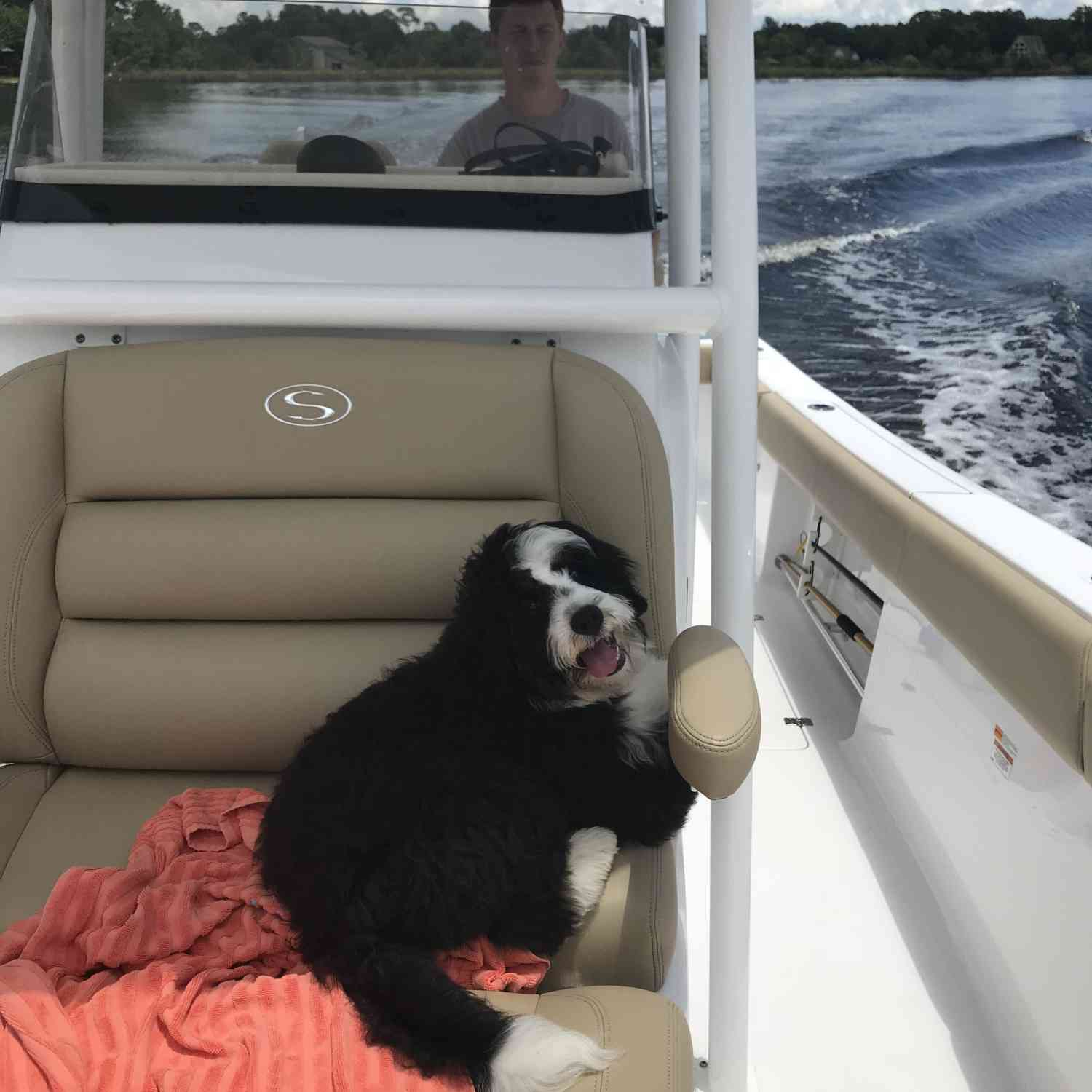 Title: Sportsman Pup - On board their Sportsman Open 282TE Center Console - Location: Theodore,Al. Participating in the Photo Contest #SportsmanNovember2018