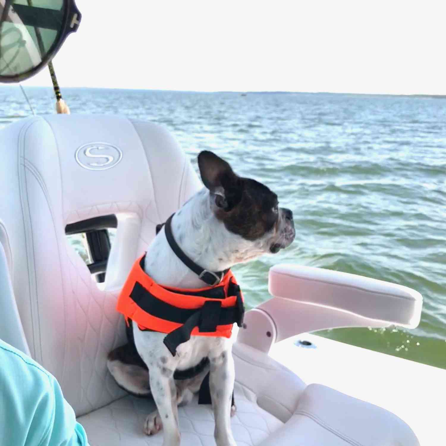 Title: Sportsman's best friend! - On board their Sportsman Open 282TE Center Console - Location: Lake Texoma, Texas. Participating in the Photo Contest #SportsmanOctober2018