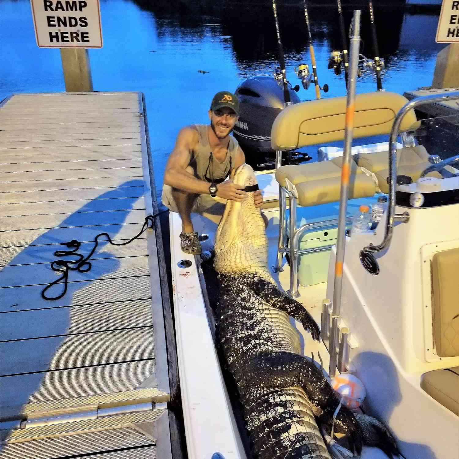 Title: Florida Gator Hunt - On board their Sportsman Tournament 214 Bay Boat - Location: South Florida. Participating in the Photo Contest #SportsmanSeptember2018