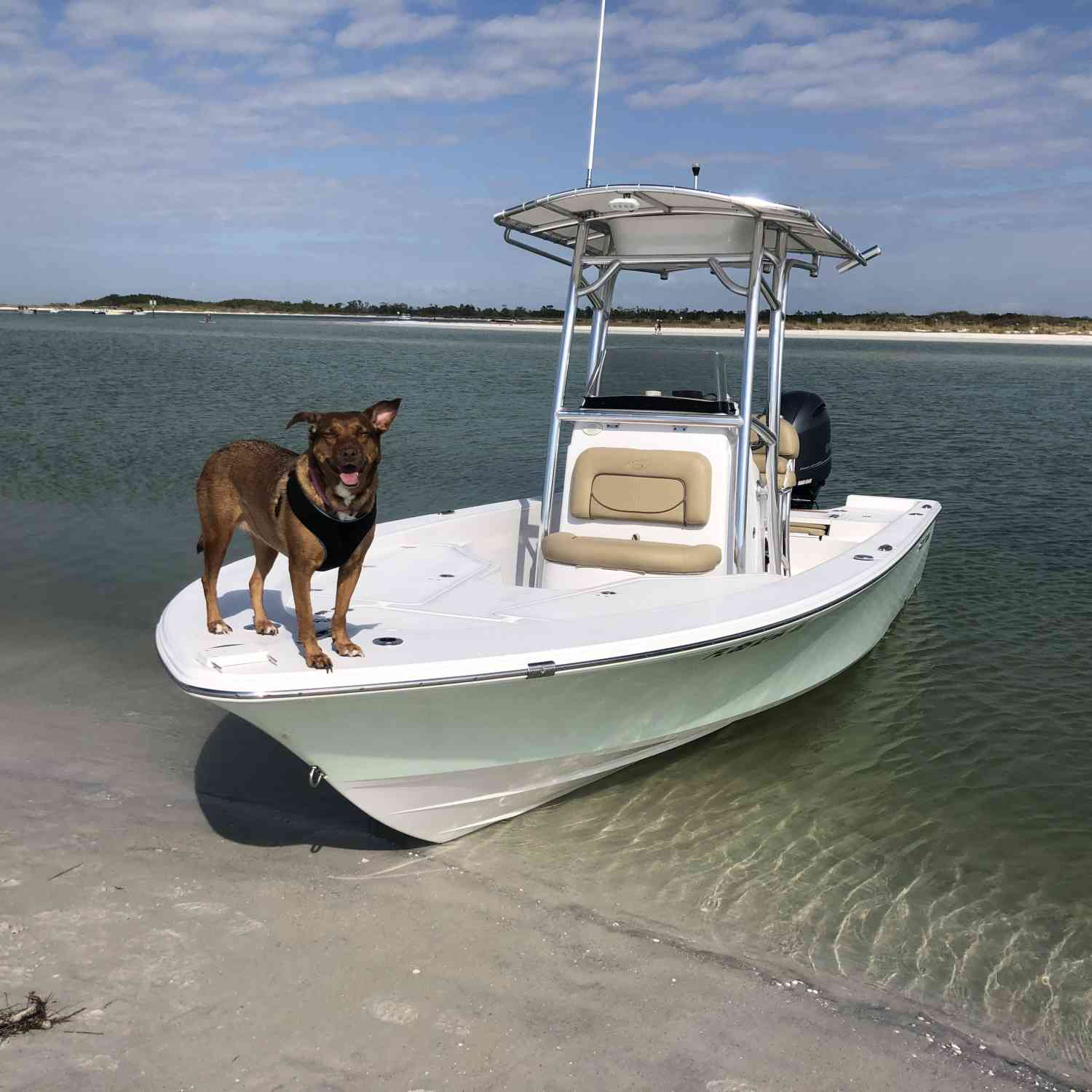 Title: Pawday at the Sandbar - On board their Sportsman Masters 227 Bay Boat - Location: St. Petersburg, Florida. Participating in the Photo Contest #SportsmanFebruary2019