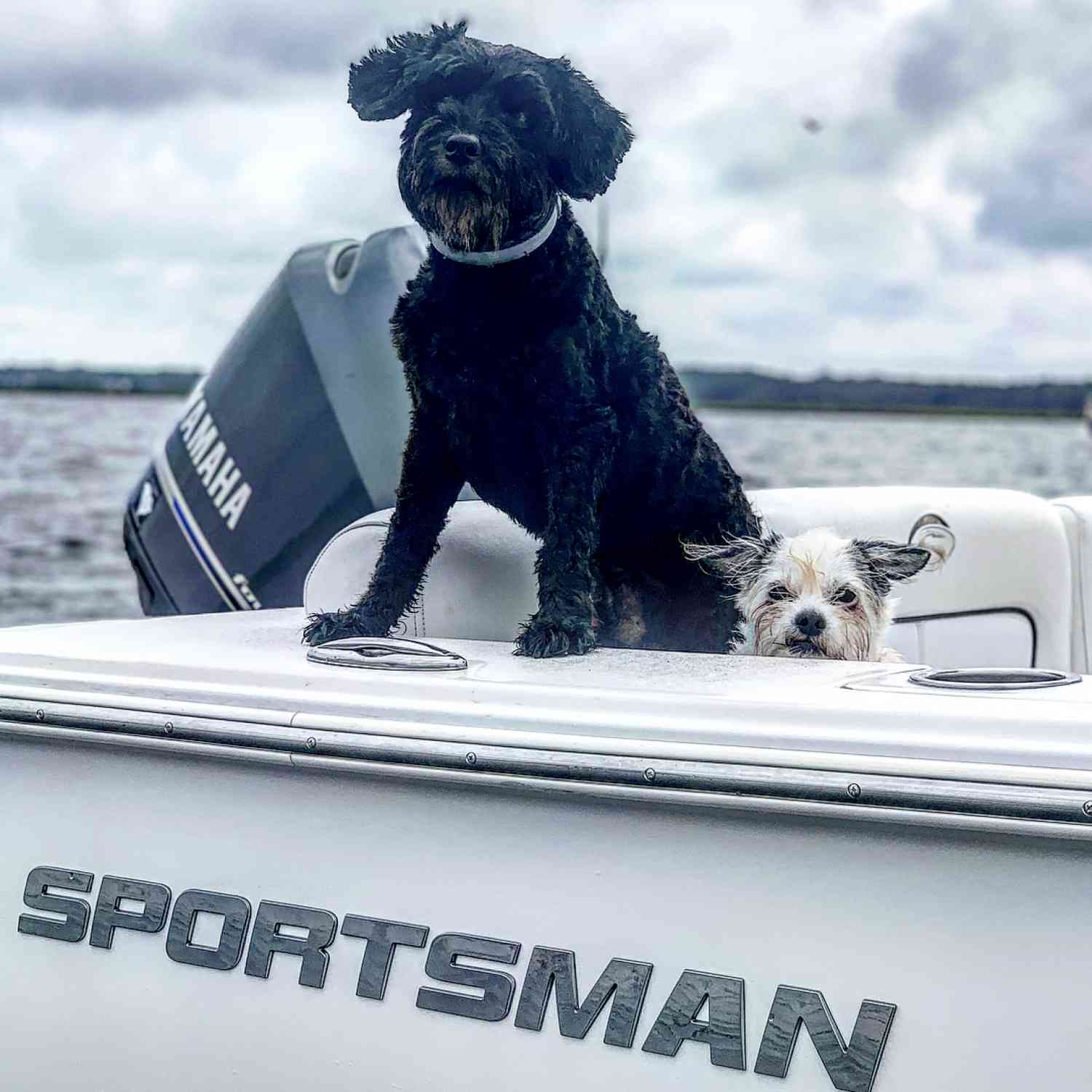 Title: Dog Days of Summer - On board their Sportsman Heritage 231 Center Console - Location: Charleston SC. Participating in the Photo Contest #SportsmanJuly2019