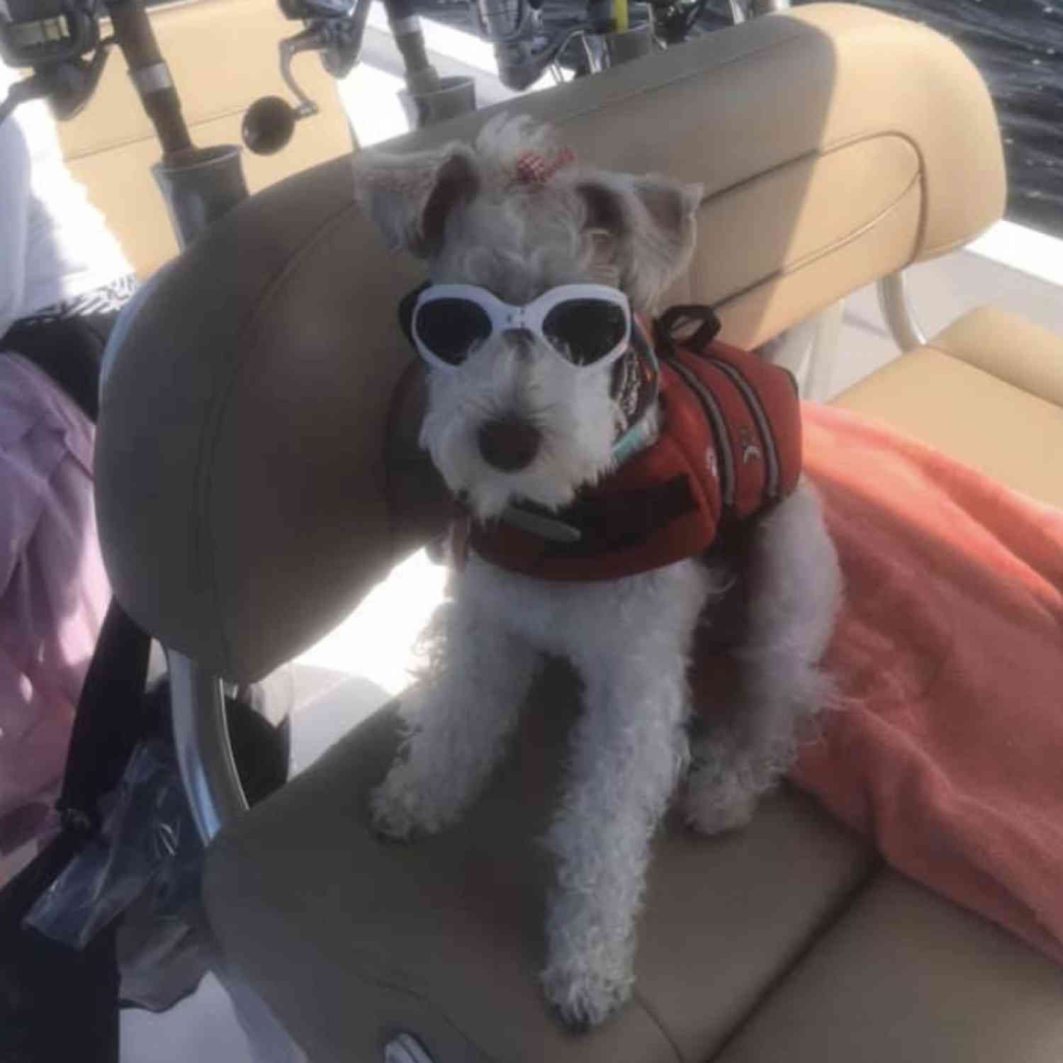 Title: Pets Love Sportsman Boats to! - On board their Sportsman Masters 247 Bay Boat - Location: Pensacola Beach, FL. Participating in the Photo Contest #SportsmanApril2020