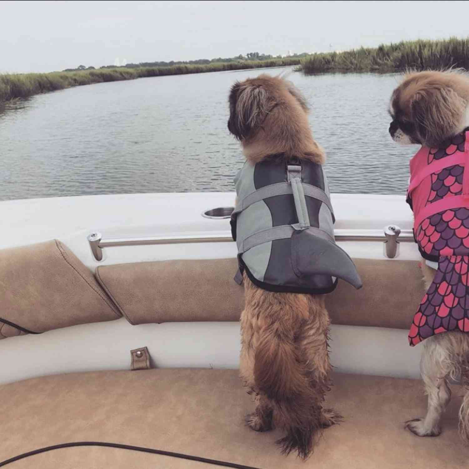 Our fur babies love being on the boat just as much as we do .... but, safety first!