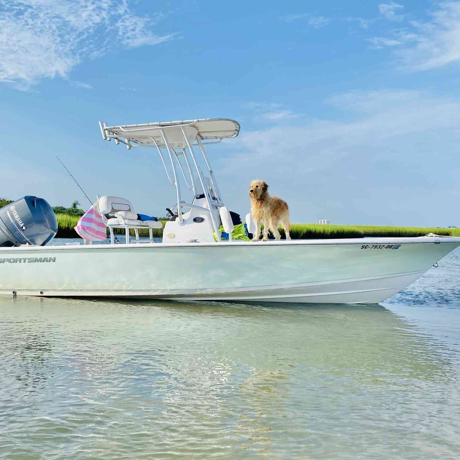 Title: Water dog - On board their Sportsman Masters 207 Bay Boat - Location: Masonboro island Wilmington NC. Participating in the Photo Contest #SportsmanAugust2020