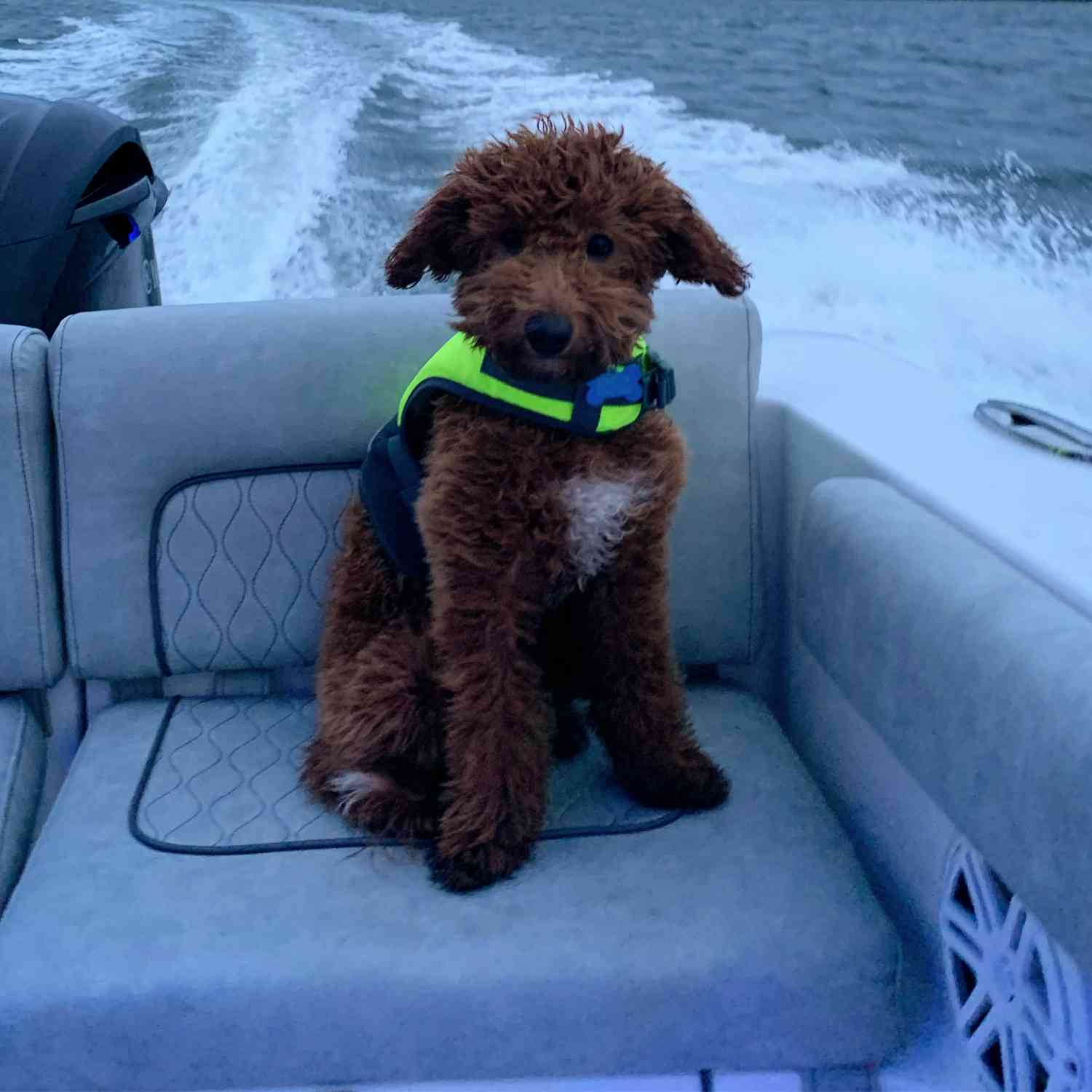 Title: Winston on the maiden voyage - On board their Sportsman Heritage 231 Center Console - Location: Tampa. Participating in the Photo Contest #SportsmanAugust2020