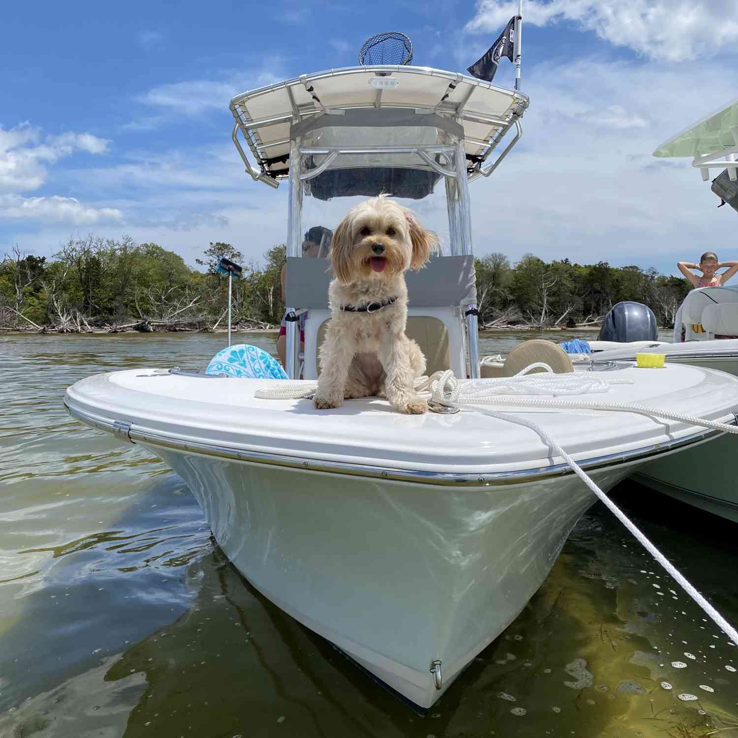 Title: Dog day's - On board their Sportsman Open 212 Center Console - Location: Barnegat bay NJ. Participating in the Photo Contest #SportsmanJune2020