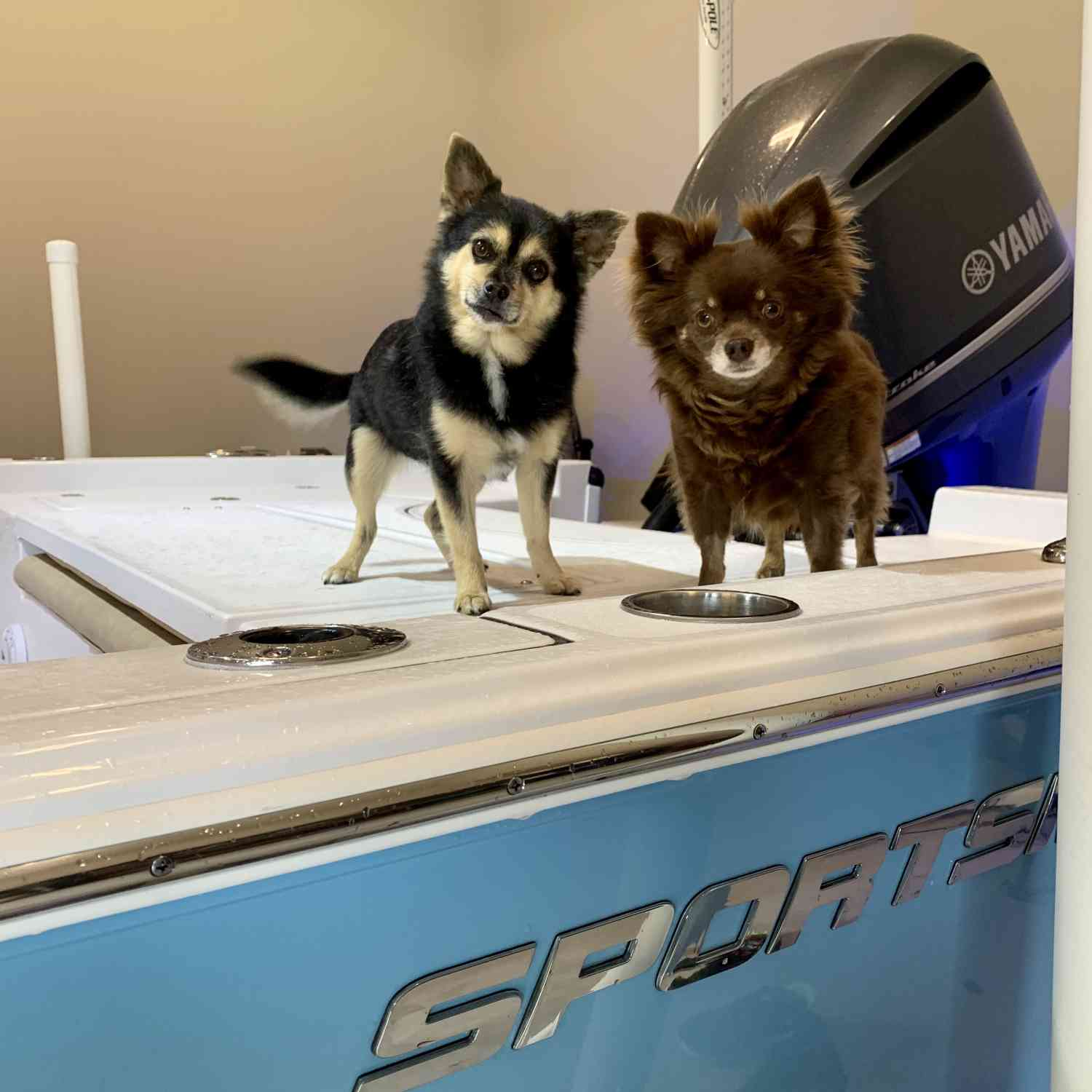 Title: Oli & Moo Take on Big Blue - On board their Sportsman Masters 247 Bay Boat - Location: Luling, Louisiana. Participating in the Photo Contest #SportsmanJune2020