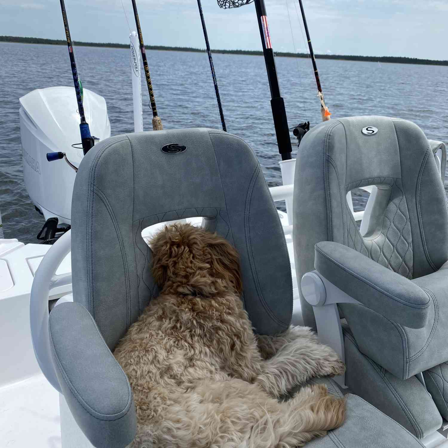 Title: Dog life - On board their Sportsman Masters 267OE Bay Boat - Location: Steinhatchee, FL. Participating in the Photo Contest #SportsmanJune2020