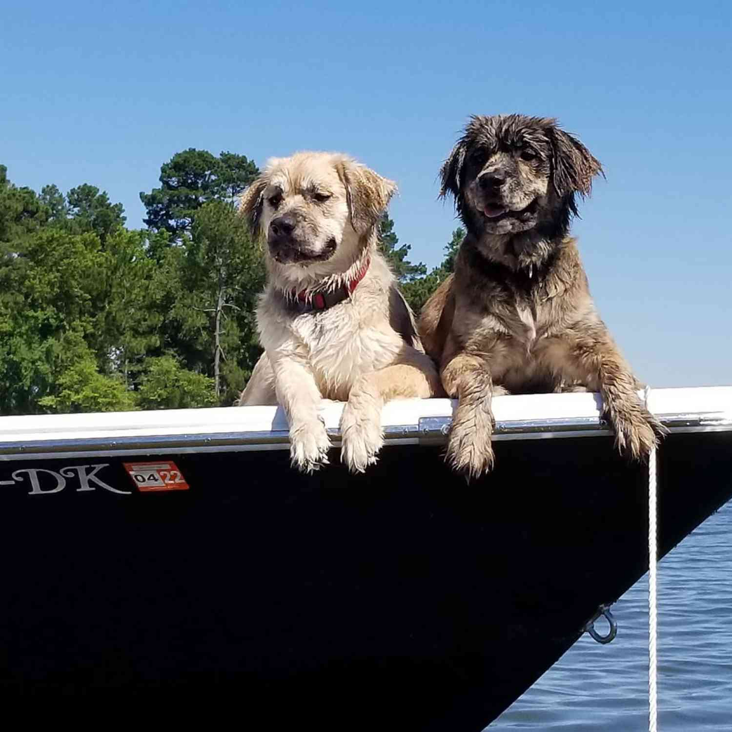 Title: Ren and Stimpy hanging at sandbar - On board their Sportsman Masters 227 Bay Boat - Location: Lake Marion SC. Participating in the Photo Contest #SportsmanJune2020