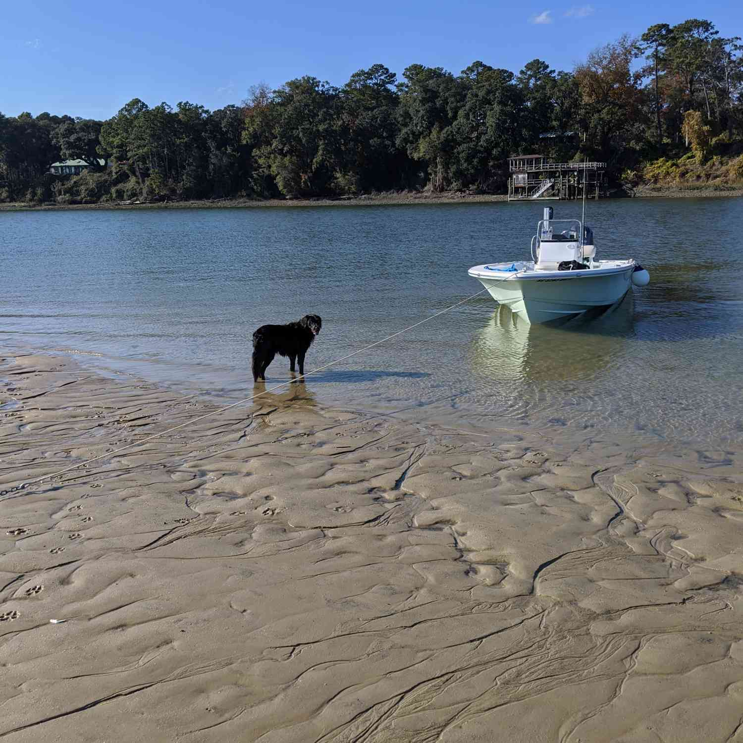 Title: Boats and dogs - On board their Sportsman Island Bay 20 Bay Boat - Location: Bluffton, south Carolina. Participating in the Photo Contest #SportsmanMay2020