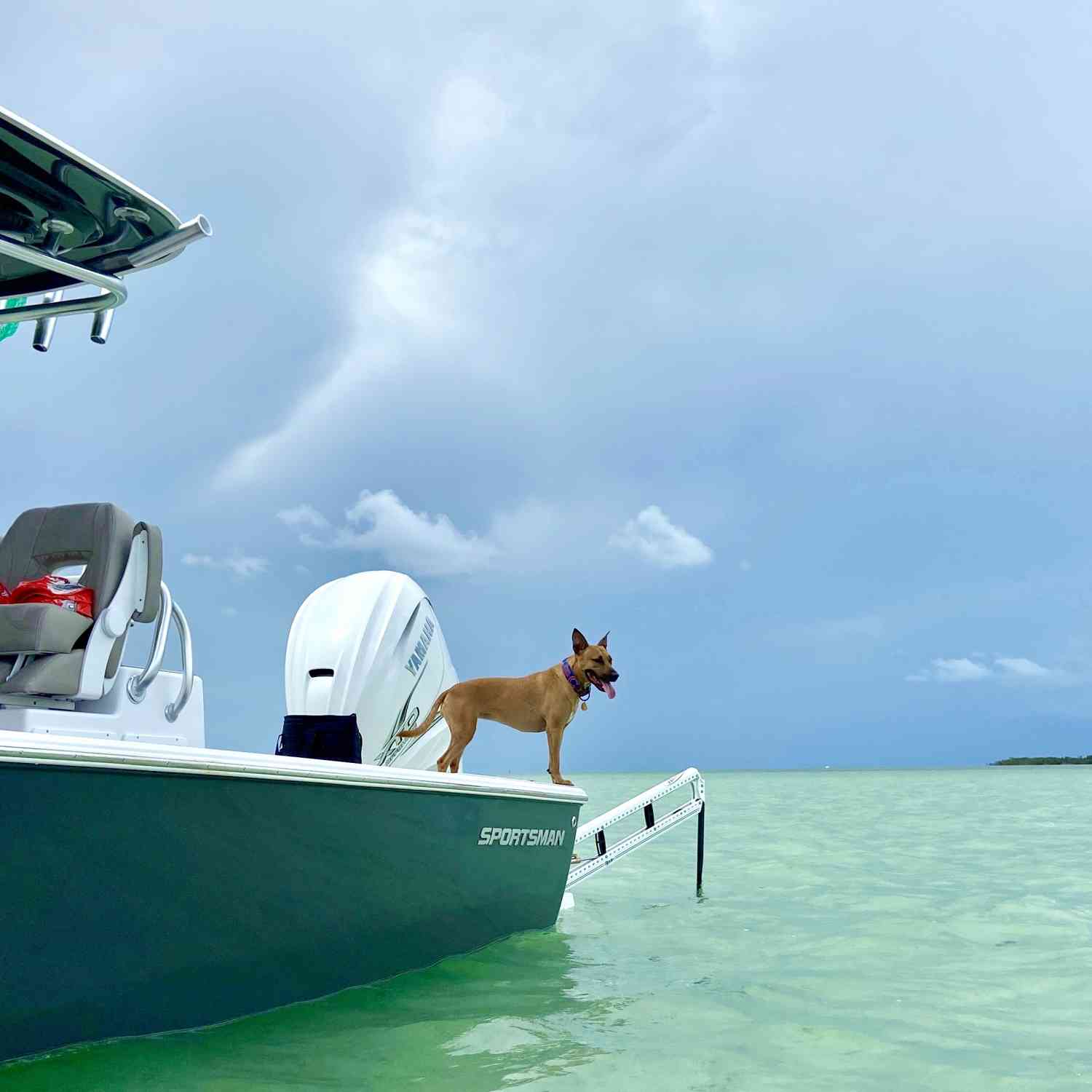 Title: Backyard Blues - On board their Sportsman Masters 267OE Bay Boat - Location: Remote Sandbar off Key West called CoCo Key. Participating in the Photo Contest #SportsmanSeptember2020